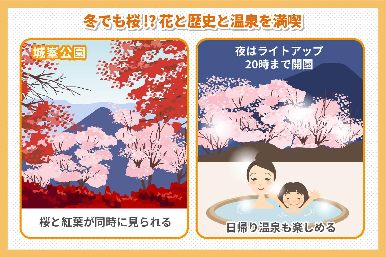 冬桜の名所!城峯公園